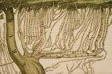 Branches of the Protestant Church: Y Prif Gymmundebau Crefyddol, Yr Enwadau. Y Sectau &c o'r Ysgrythyr Lan
