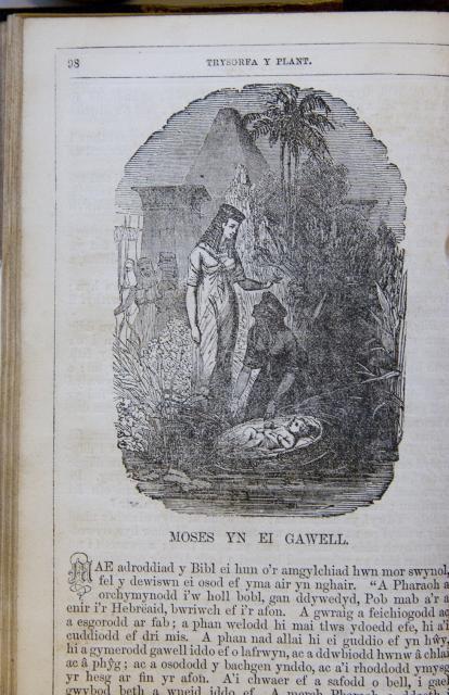 Moses yn ei Gawell